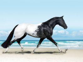 Это самые красивые лошади на планете!