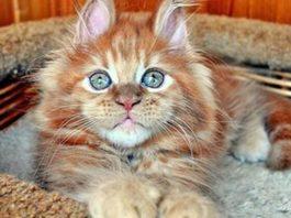 20 замечательных животных, которые профессионально заряжают хорошим настроением