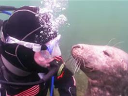 Водолаз не мог понять, что хочет от него этот тюлень. Пока тот не схватил его руку!
