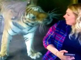 Когда она подошла к вольеру с тигром, то была шокирована его реакцией