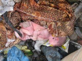 Женщина подошла к груде мусора и услышала приглушенный писк