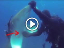 Он наслаждался дайвингом в Атлантическом океане, когда большая лимонная акула подплыла к нему…