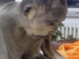 Невозможно поверить! Монах, погребенный заживо, дышал… Ученые через века открыли его страшную тайну