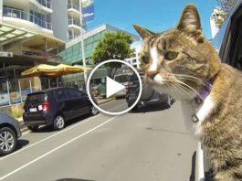 Оцените её способности! Книга рекордов Гиннесса вручила этой кошке звание самой умной кошки в мире!