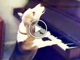 Вы не поверите своим глазам! Пес играет на пианино и великолепно поет!