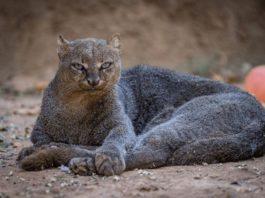 15 удивительных зверей, в существование которых сложно поверить