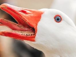 Смертельно опасные животные, которых вы считали безобидными