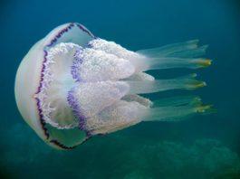 Будьте внимательны: Опасные животные Черного моря