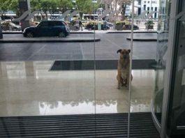 Собака 6 месяцев ждала женщину за пределами отеля. Вот, что произошло дальше…