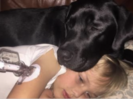 Эта собака будит каждый день своего хозяина, чтобы спасти ему жизнь