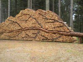 Он уложил тысячи кусков деревяшек для создания этого потрясающего проекта. Сегодня мы покажем Вам 13 фотографий!