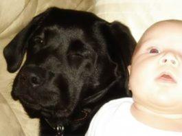 Я просила свою сестру не дарить щенка моей новорожденной дочке. Меня не послушали, и вот чем все кончилось…