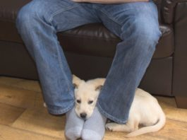 Я понятия не имел! Вот почему собаки любят сидеть в ногах