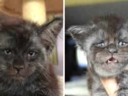 В Подмосковье родился котенок с человеческим лицом