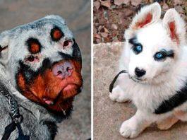 8 удивительных собак с уникальным окрасом