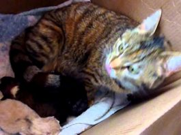 К маме-кошке и ее котятам принесли щенка. А теперь следите за реакцией усатой!