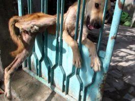 Пёс плакал от боли, когда застрял в заборе. Люди боялись к нему подойти, но посмотри, что случилось дальше!