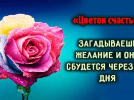 Волшебный «Цветок счастья», загадываешь желание, и оно сбудется через 2-3 дня