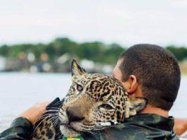 Ягуар тонул в потоке воды, когда вдруг он увидел рядом человека