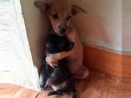 Обнимающиеся щенки так тронули двух монахов, что они не смогли пройти мимо этих крох