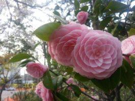 26 необычайно красивых цветов, которые вы никогда не видели