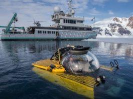 На морском дне Антарктиды кипит «тропическая» жизнь