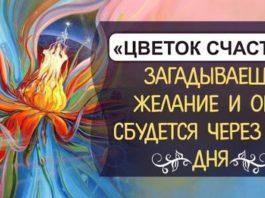 «Цветок счастья» — просто загадываешь желание и оно сбудется через 2-3 дня