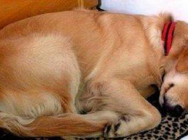 Домой к женщине приходил пес и просто спал. Но в один из дней к его ошейнику была прикреплена записка