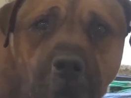Душераздирающая реакция пса, который осознал, что его бросили хозяева