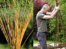 Мужчина срезал веточки вербы и подождал, пока они пустили корни, а потом сделал настоящий шедевр!