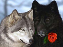 Притча про двух волков. Читается за 20 секунд, а запоминается навсегда