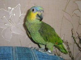 «Продам попугая»: это объявление на авито, которое «взорвало» интернет