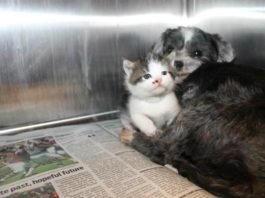 Собака кормила и защищала котенка, которого бросили на дне глубокого оврага…