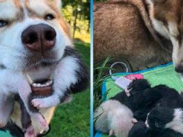 Собака нашла в лесу выброшенных котят и стал им мамой. Животные добрее людей!