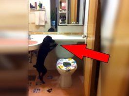 Хозяин снял на камеру своего пса в туалете. Этот ролик сразит вас наповал!