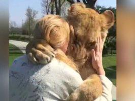 Женщина вырастила двух осиротевших львят, позже их пришлось отдать в зоопарк. Прошли годы и вот их встреча!