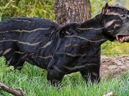 10 самых редких пород собак на планете