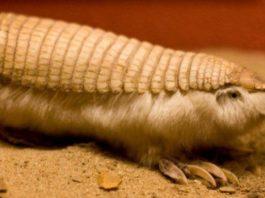 30+ самых странных животных нашей планеты
