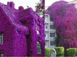 Эти красивые дома просто утопают в море цветов