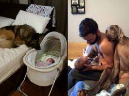 15 примеров безусловной любви, которую нам демонстрируют домашние питомцы