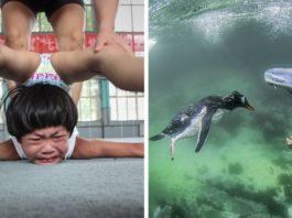25+ лучших снимков международного фотоконкурса Siena International Photography Awards 2018