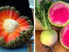 25 самых экзотичных фруктов и овощей
