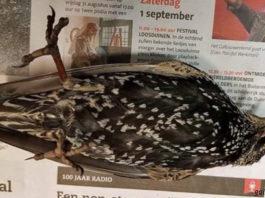В Голландии тестировали 5G — сотни птиц погибли сразу же! Что это было?