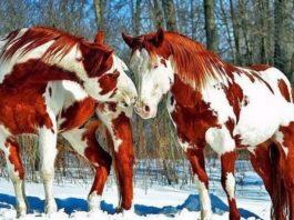 10 самых красивых лошадей на планете!