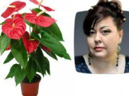 Елена Курилова рассказала о 10 конкретных растениях которые принесут счастье и деньги в ваш дом