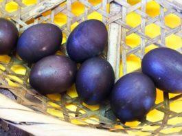 Фермер нашел странные яйца черного цвета – посмотрите, что вылупилось из них