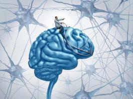Нейропластика мозга: Как ВЫ мыслите, так вам и БУДЕТ