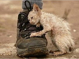 «Он шел по улице и тихо плакал» Цепляет за живое!