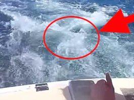 Ребята плыли по морю, как вдруг на лодку запрыгнуло это чудо