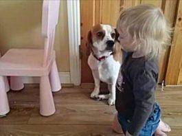 Собака разбила тарелку малышки (1,1 млн просмотров)